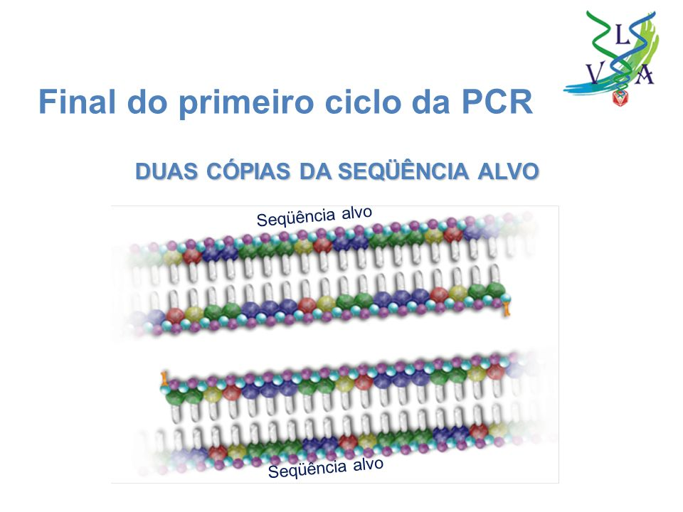 Final do primeiro ciclo da PCR