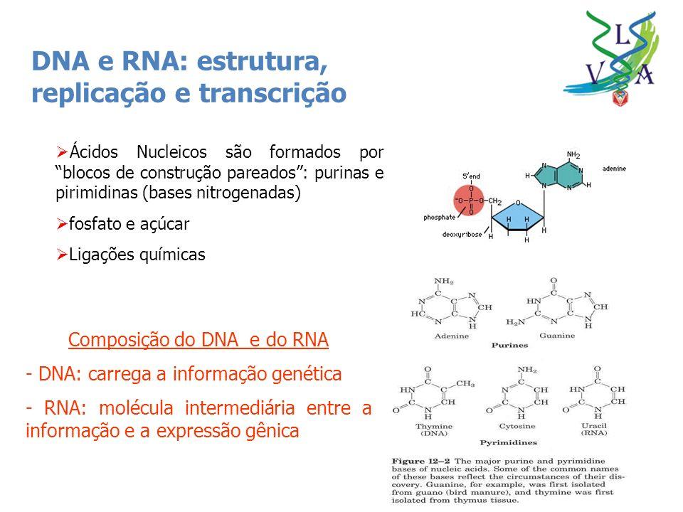 Composição do DNA e do RNA
