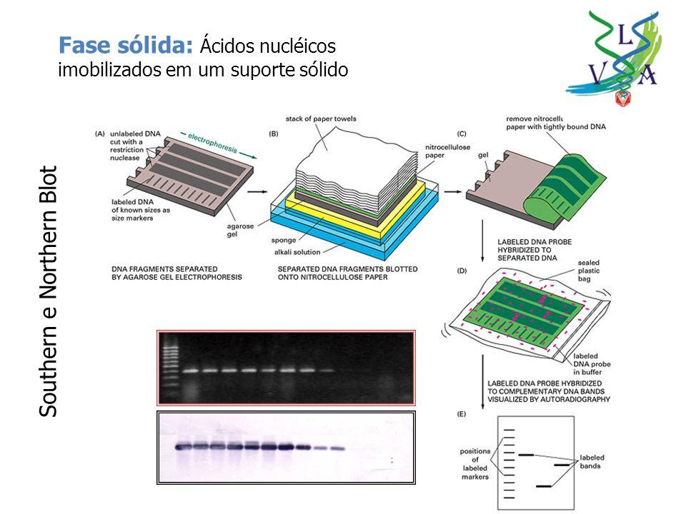 Fase sólida: Ácidos nucléicos imobilizados em um suporte sólido