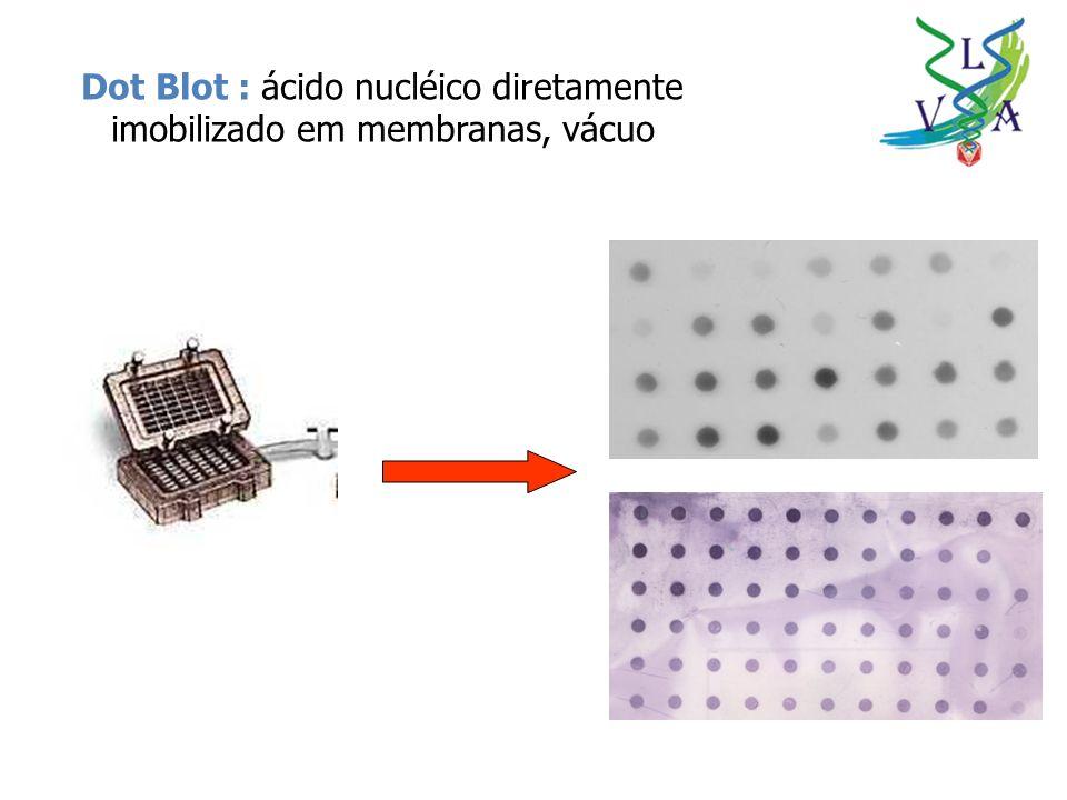 Dot Blot : ácido nucléico diretamente imobilizado em membranas, vácuo