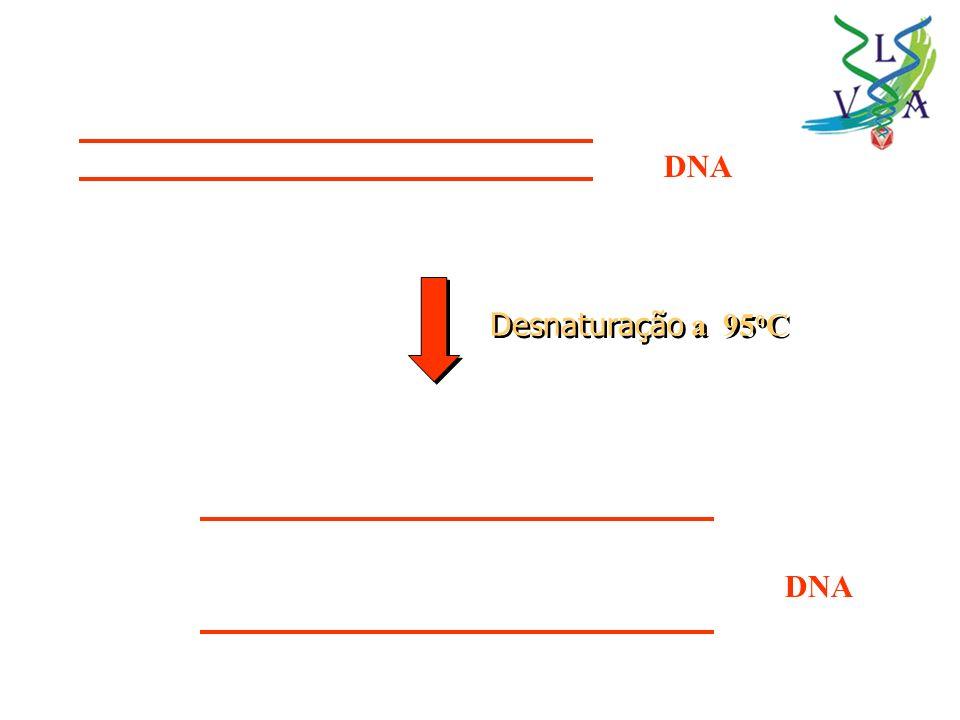 DNA Desnaturação a 95oC DNA