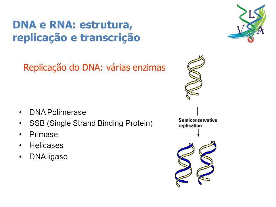 DNA e RNA: estrutura, replicação e transcrição