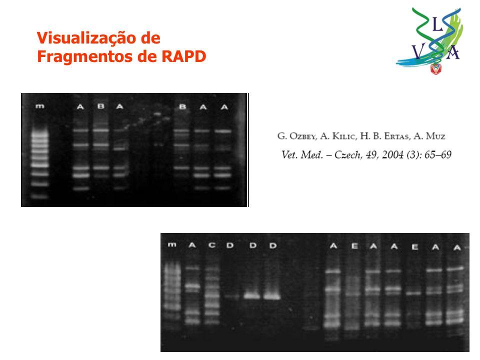 Visualização de Fragmentos de RAPD