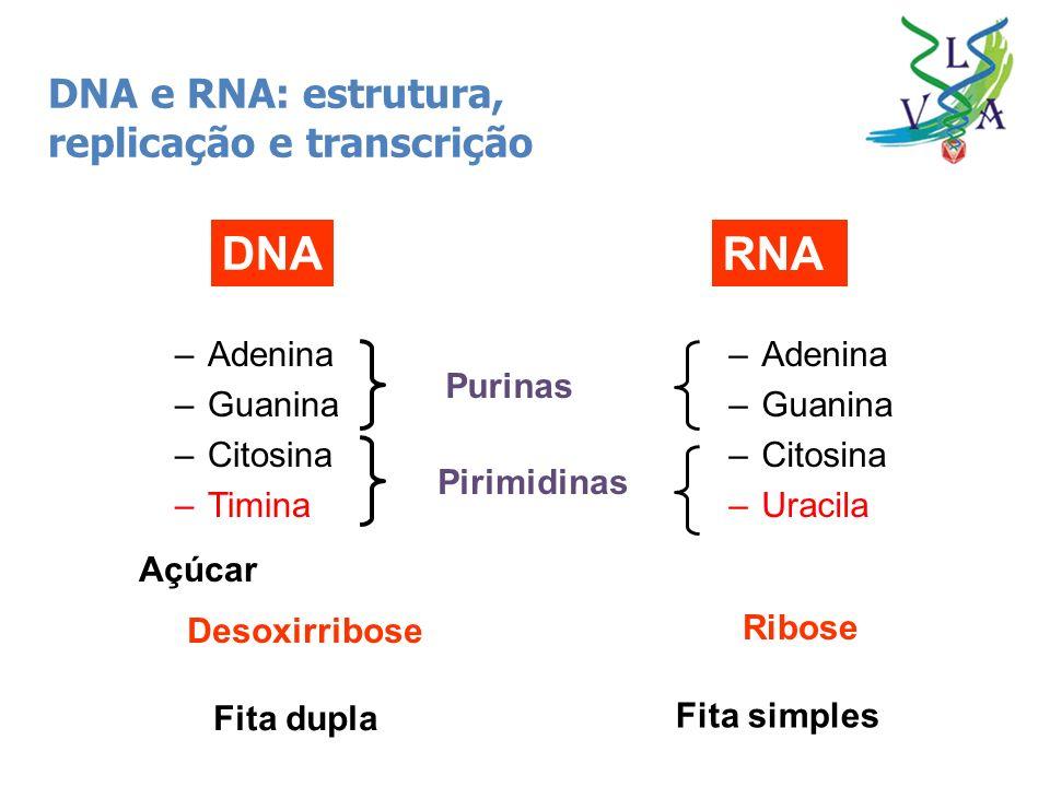 DNA RNA DNA e RNA: estrutura, replicação e transcrição Adenina Guanina