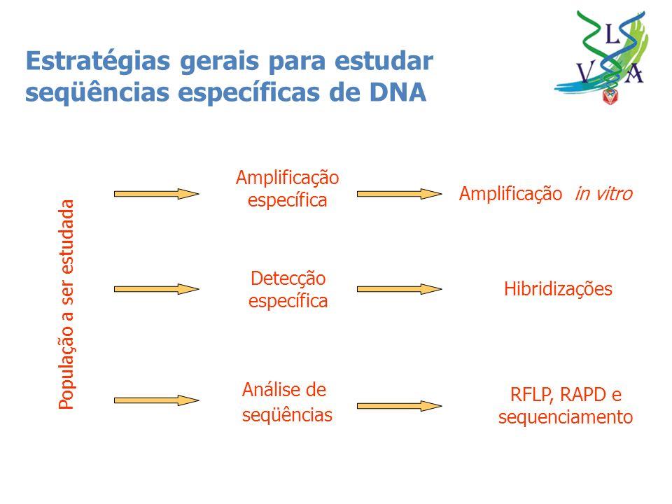 Estratégias gerais para estudar seqüências específicas de DNA