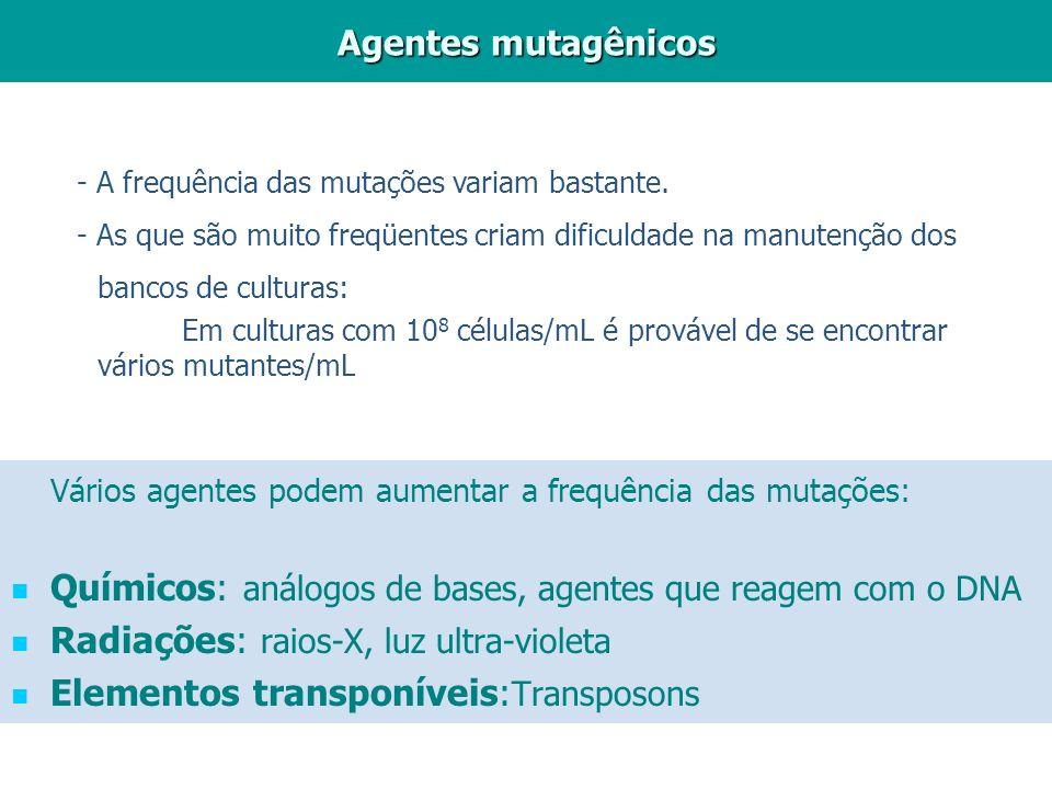 Vários agentes podem aumentar a frequência das mutações: