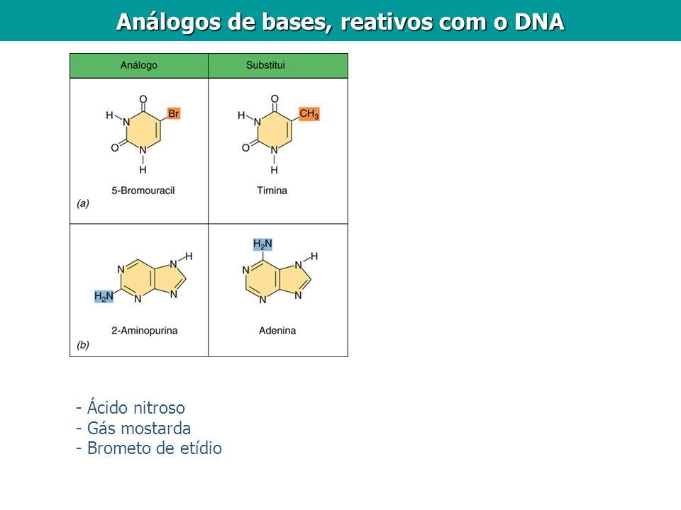 Análogos de bases, reativos com o DNA