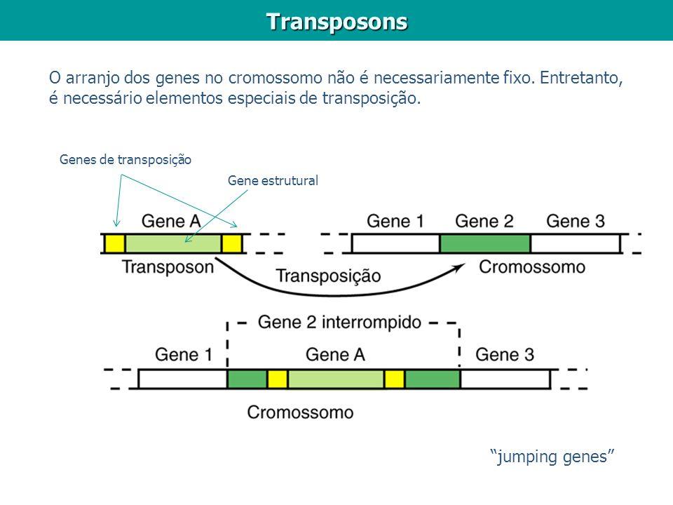 Transposons O arranjo dos genes no cromossomo não é necessariamente fixo. Entretanto, é necessário elementos especiais de transposição.