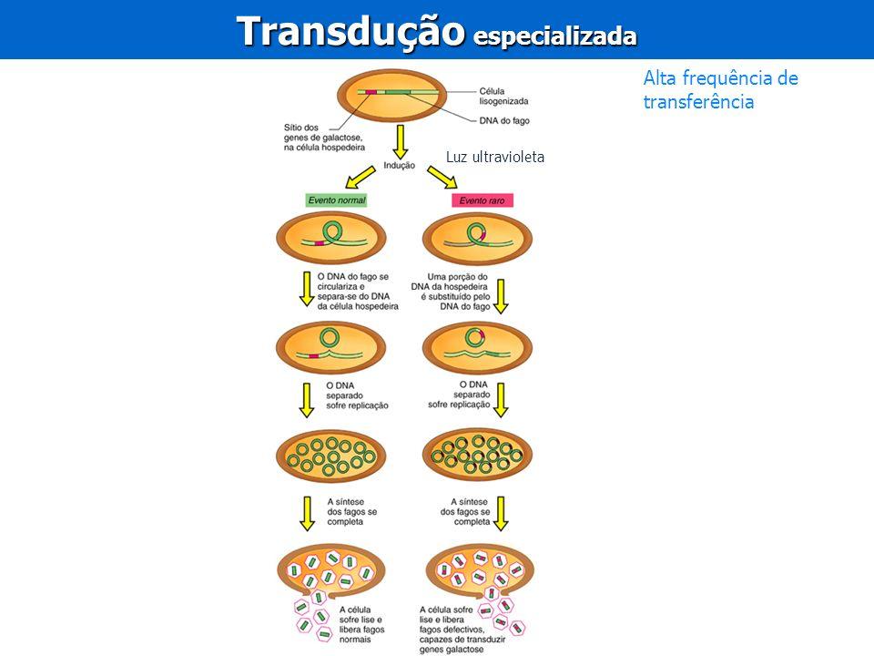 Transdução especializada