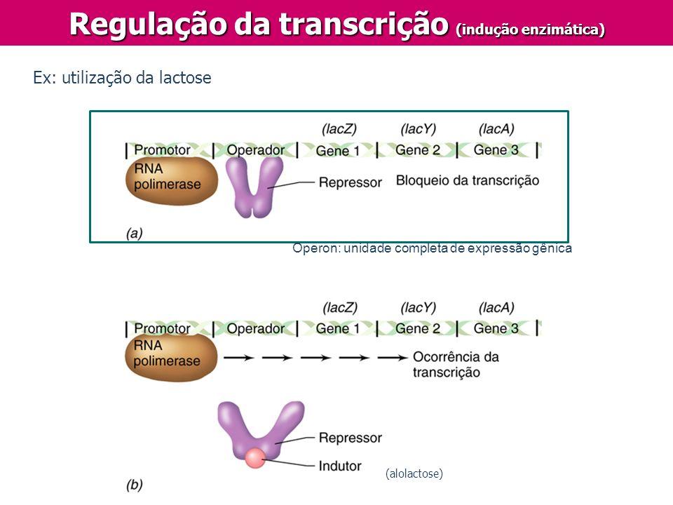 Regulação da transcrição (indução enzimática)