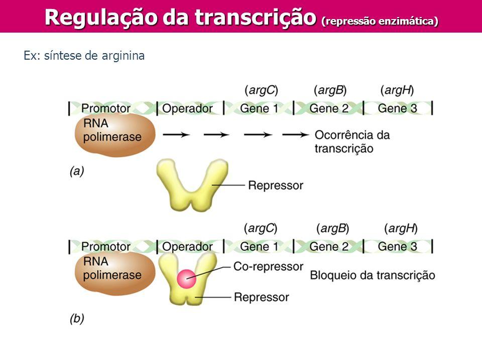 Regulação da transcrição (repressão enzimática)