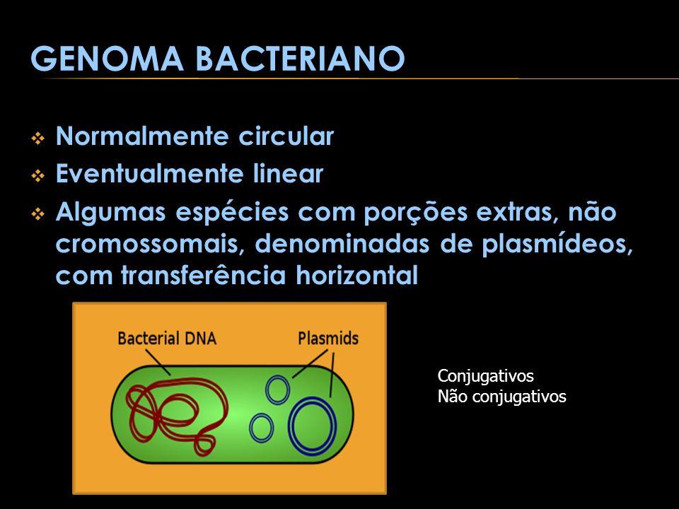 GENOMA BACTERIANO Normalmente circular Eventualmente linear