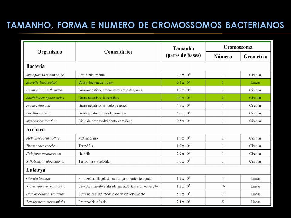 Tamanho, forma e numero de cromossomos bacterianos