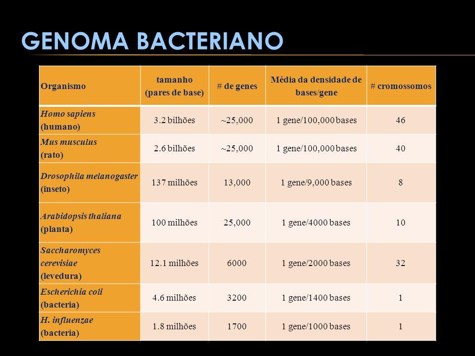 tamanho (pares de base) Média da densidade de bases/gene