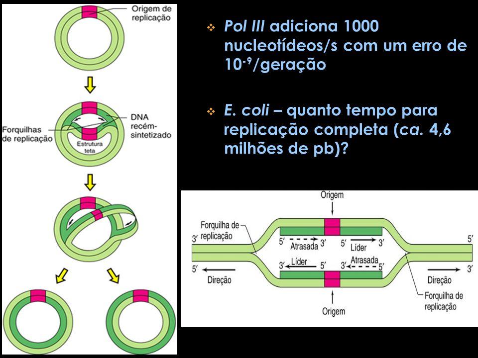 Pol III adiciona 1000 nucleotídeos/s com um erro de 10-9/geração