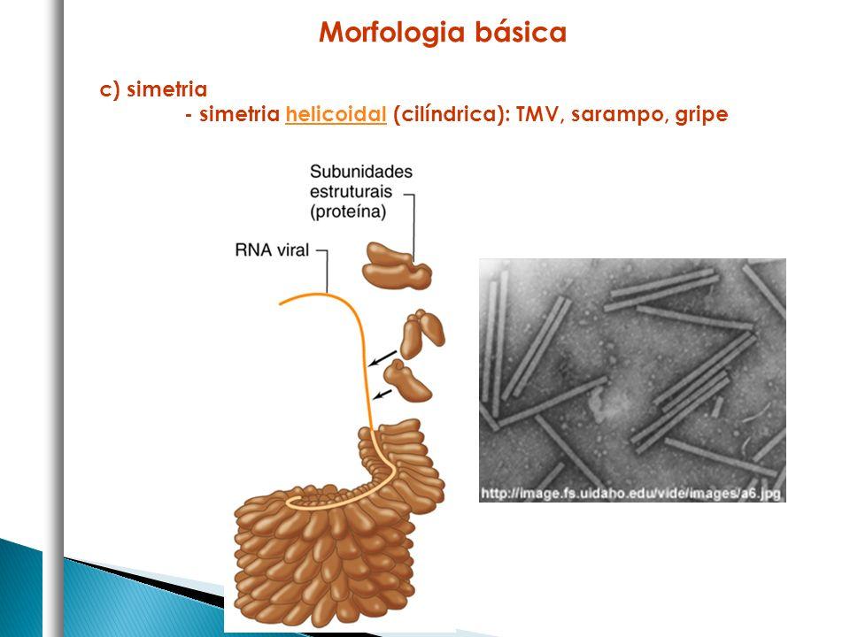 Morfologia básica c) simetria