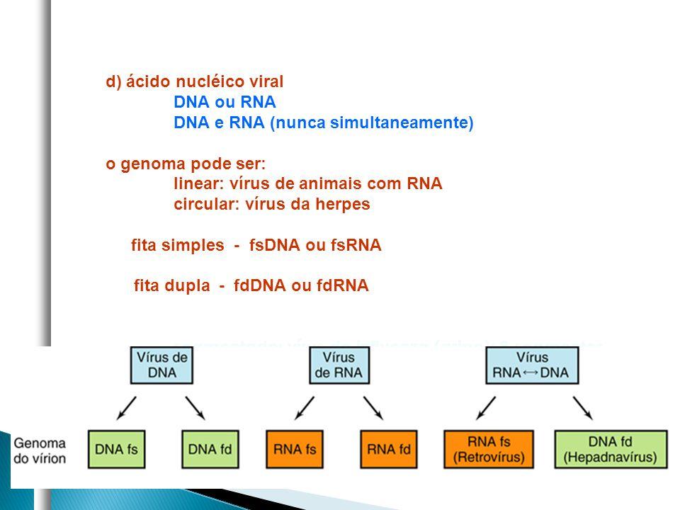 d) ácido nucléico viral