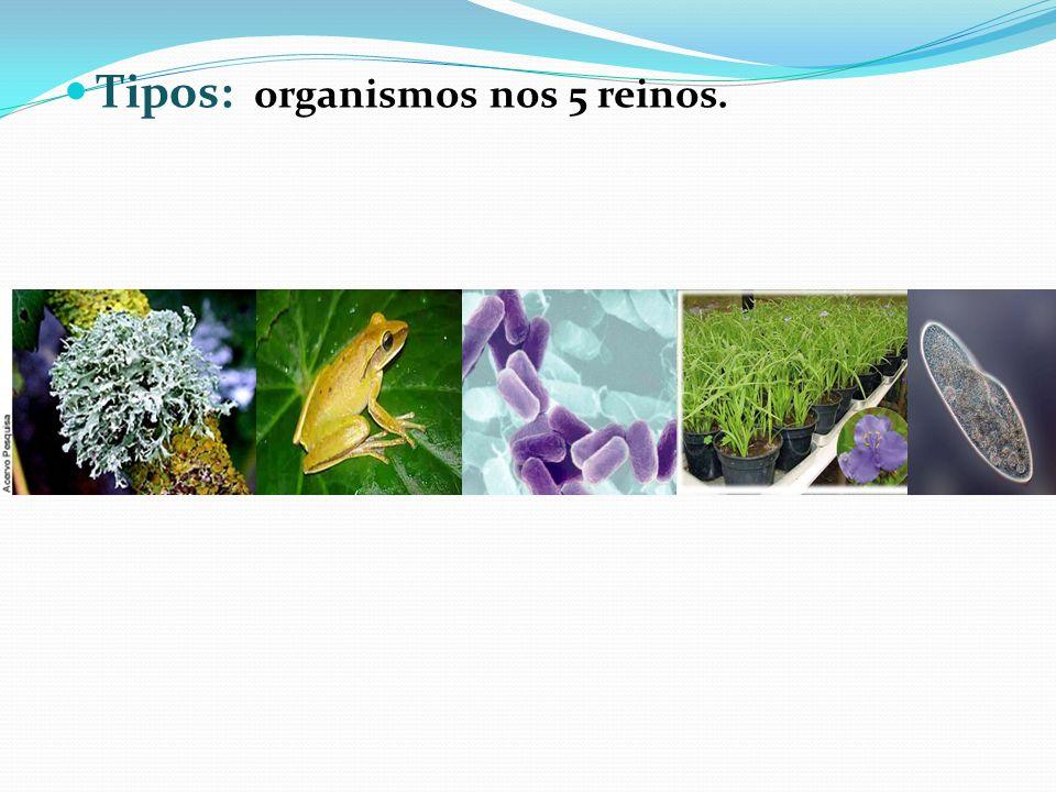 Tipos: organismos nos 5 reinos.