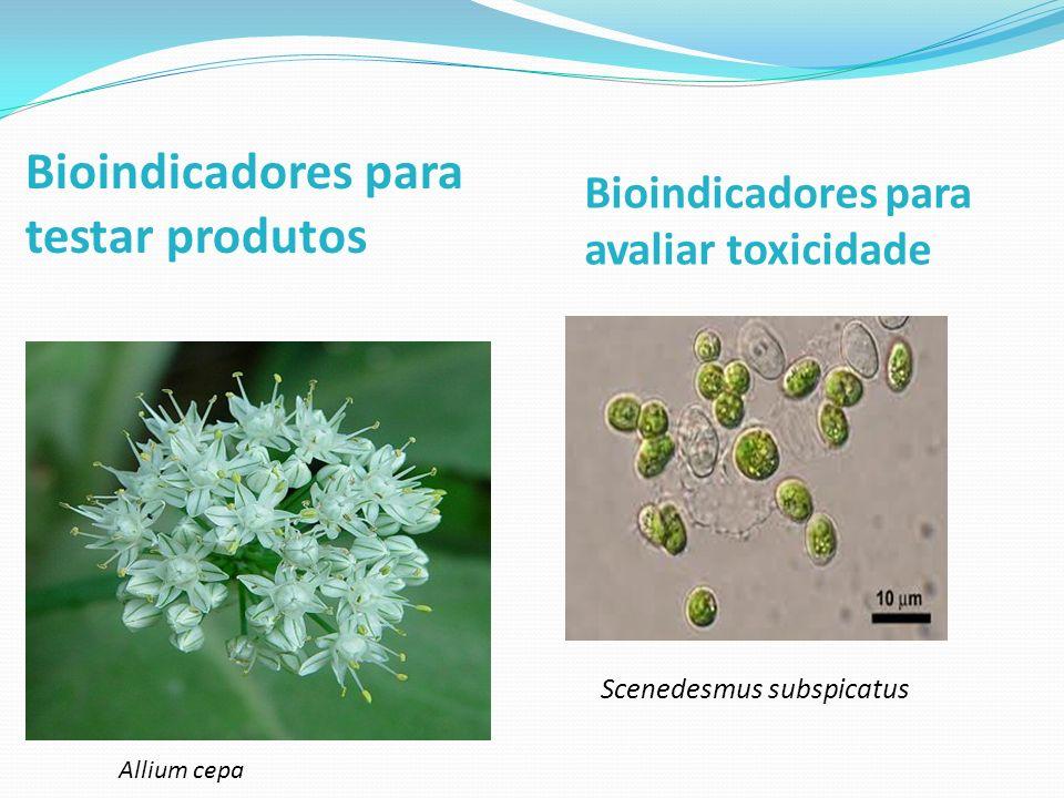 Bioindicadores para testar produtos