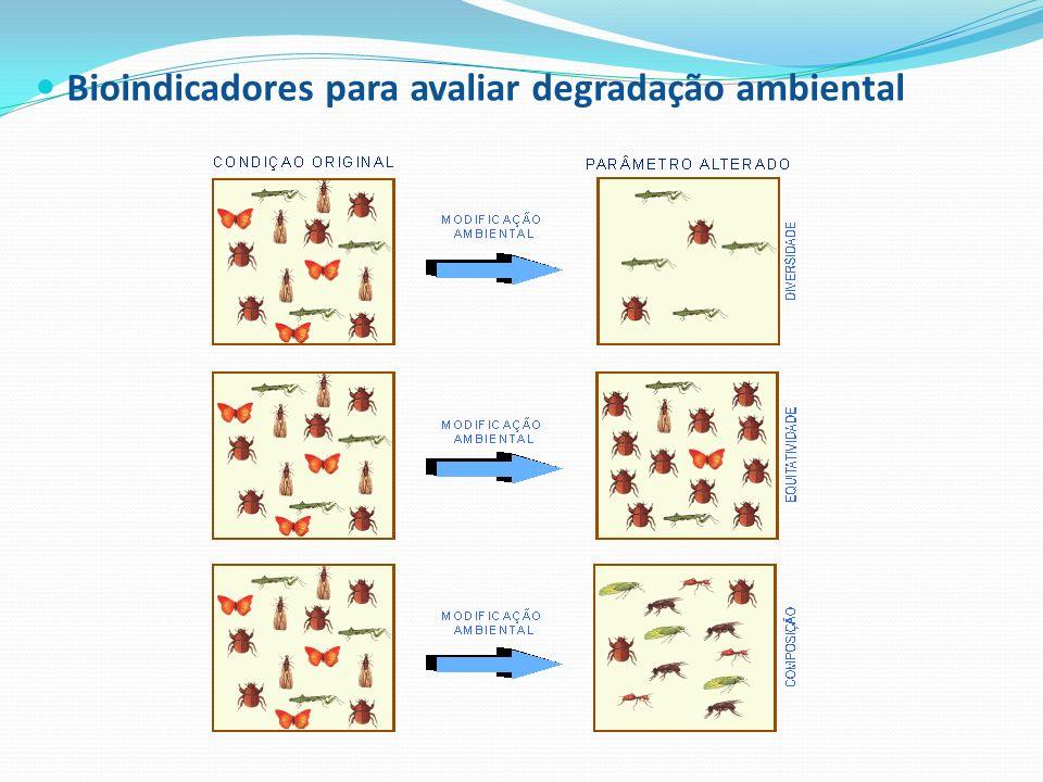 Bioindicadores para avaliar degradação ambiental