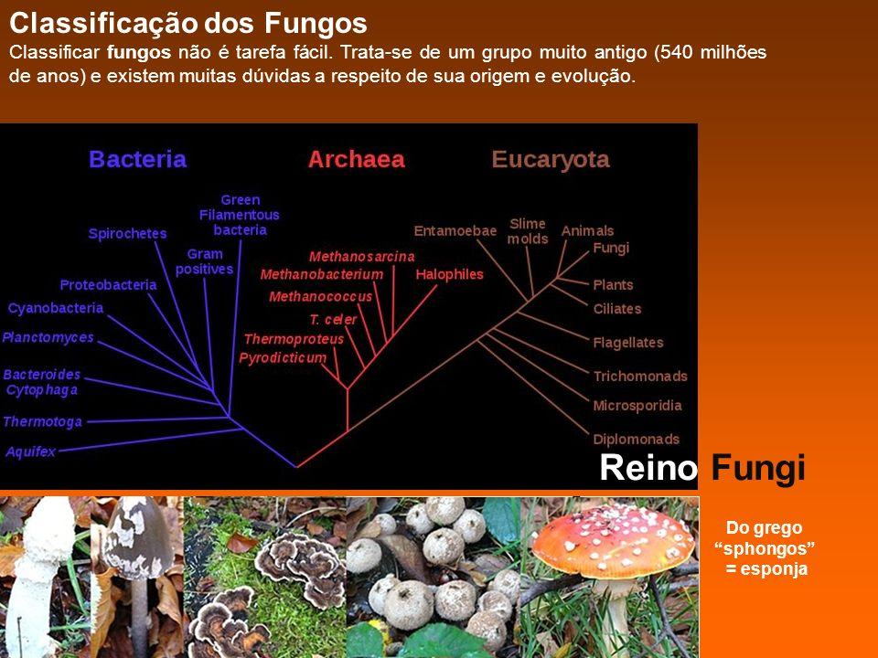 Reino Fungi Classificação dos Fungos