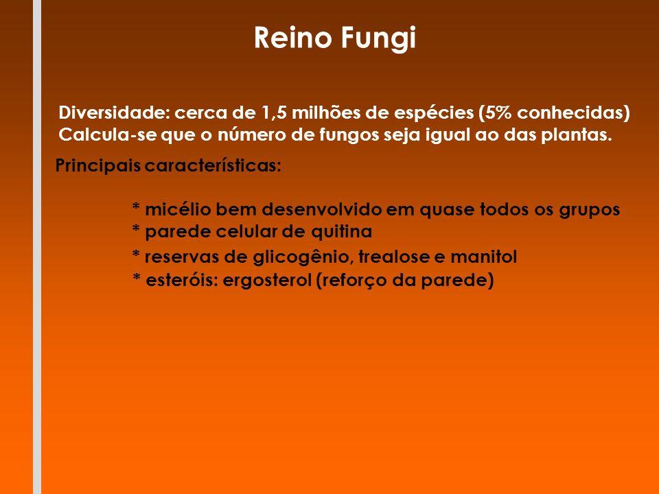 Reino Fungi Diversidade: cerca de 1,5 milhões de espécies (5% conhecidas) Calcula-se que o número de fungos seja igual ao das plantas.