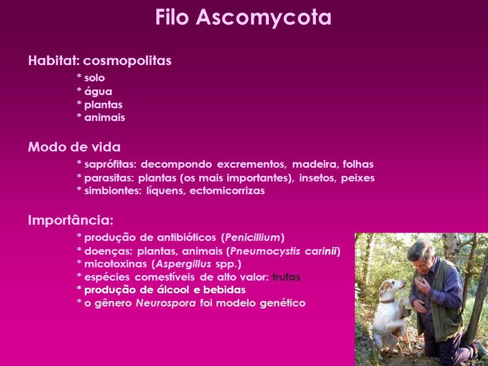 Filo Ascomycota Habitat: cosmopolitas * solo Modo de vida