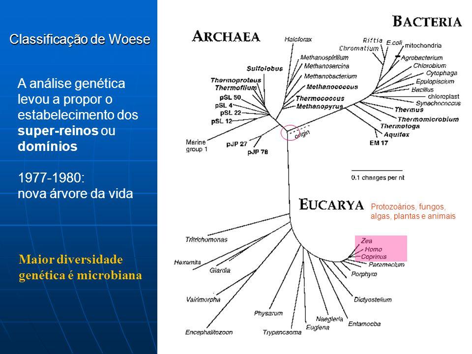 1970-1980: Carl Woese estuda o gene que codifica a subunidade 16S e 18S dos ribossomos: