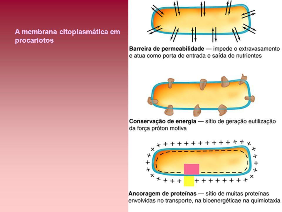 A membrana citoplasmática em