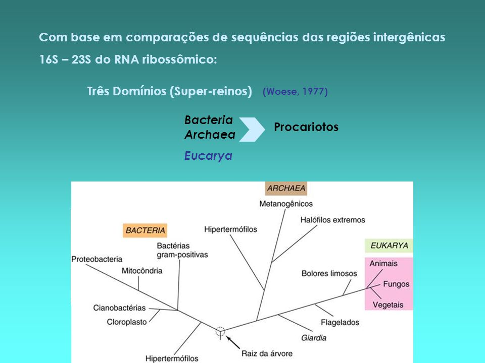 Três Domínios (Super-reinos) Bacteria Archaea Eucarya