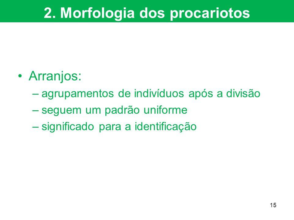 2. Morfologia dos procariotos