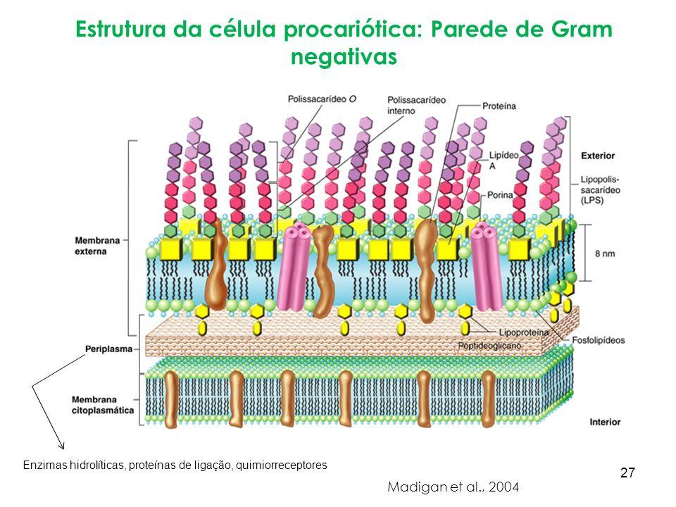 Estrutura da célula procariótica: Parede de Gram negativas