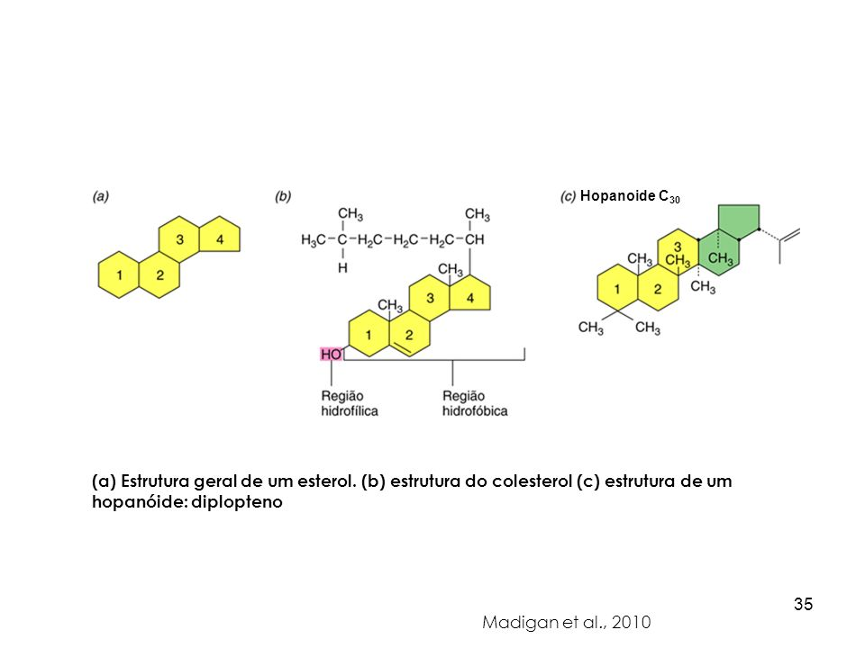 Hopanoide C30(a) Estrutura geral de um esterol. (b) estrutura do colesterol (c) estrutura de um hopanóide: diplopteno.
