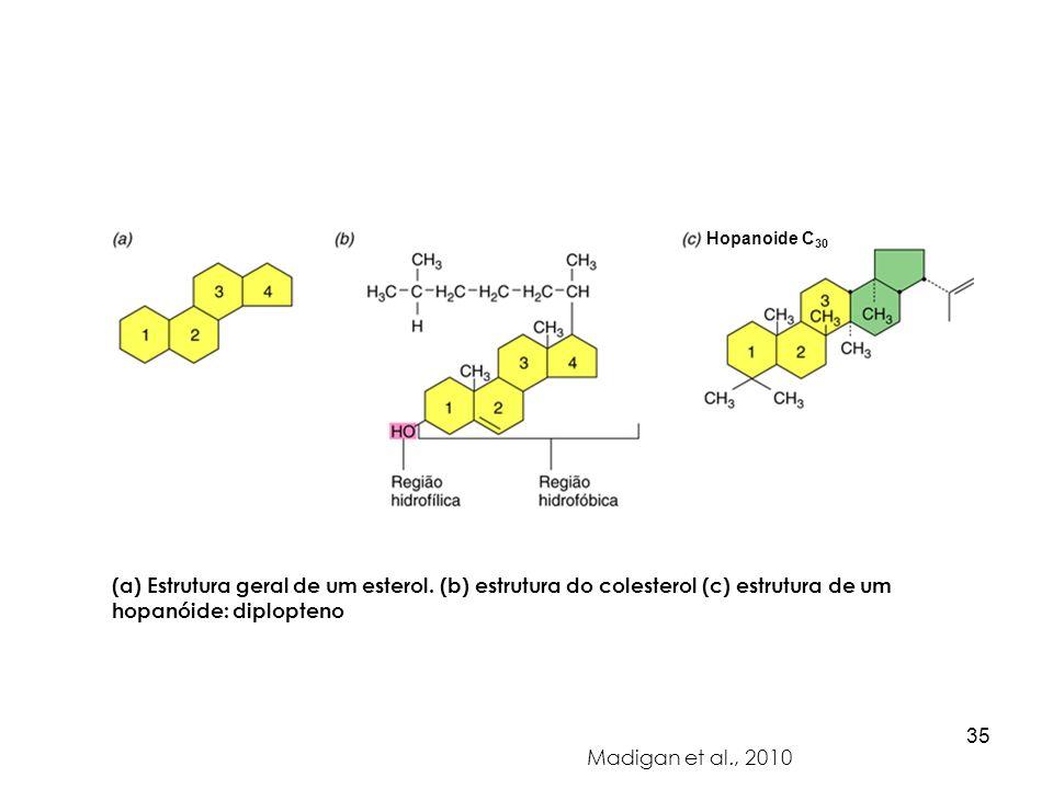 Hopanoide C30 (a) Estrutura geral de um esterol. (b) estrutura do colesterol (c) estrutura de um hopanóide: diplopteno.