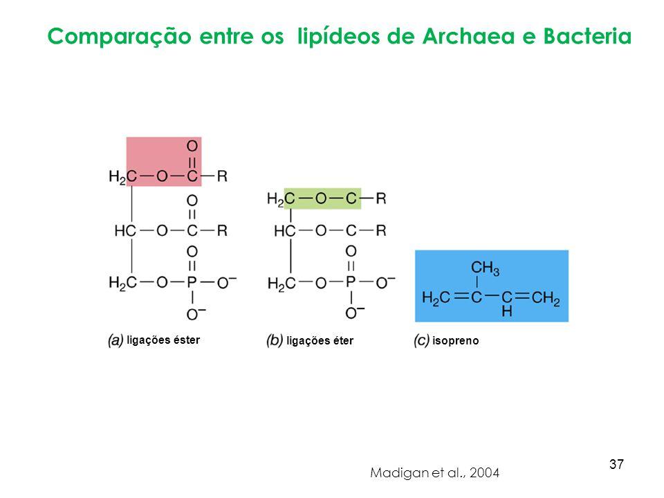 Comparação entre os lipídeos de Archaea e Bacteria