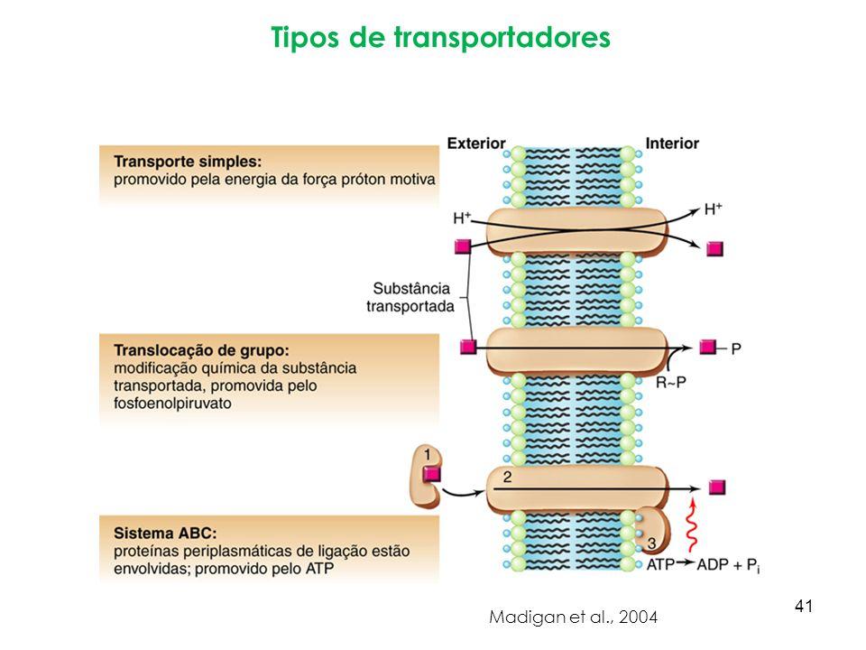 Tipos de transportadores