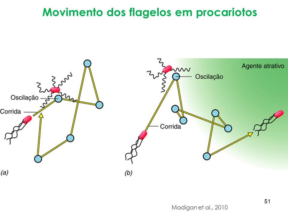 Movimento dos flagelos em procariotos