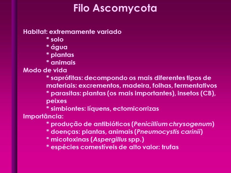 Filo Ascomycota Habitat: extremamente variado * solo * água * plantas