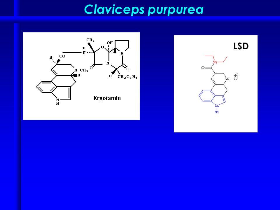 Claviceps purpurea LSD