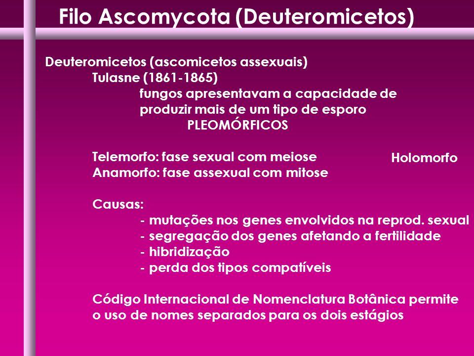 Filo Ascomycota (Deuteromicetos)