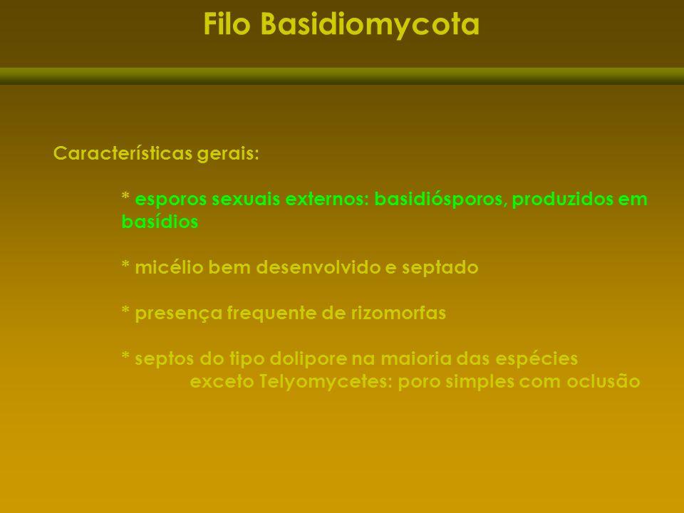 Filo Basidiomycota Características gerais: