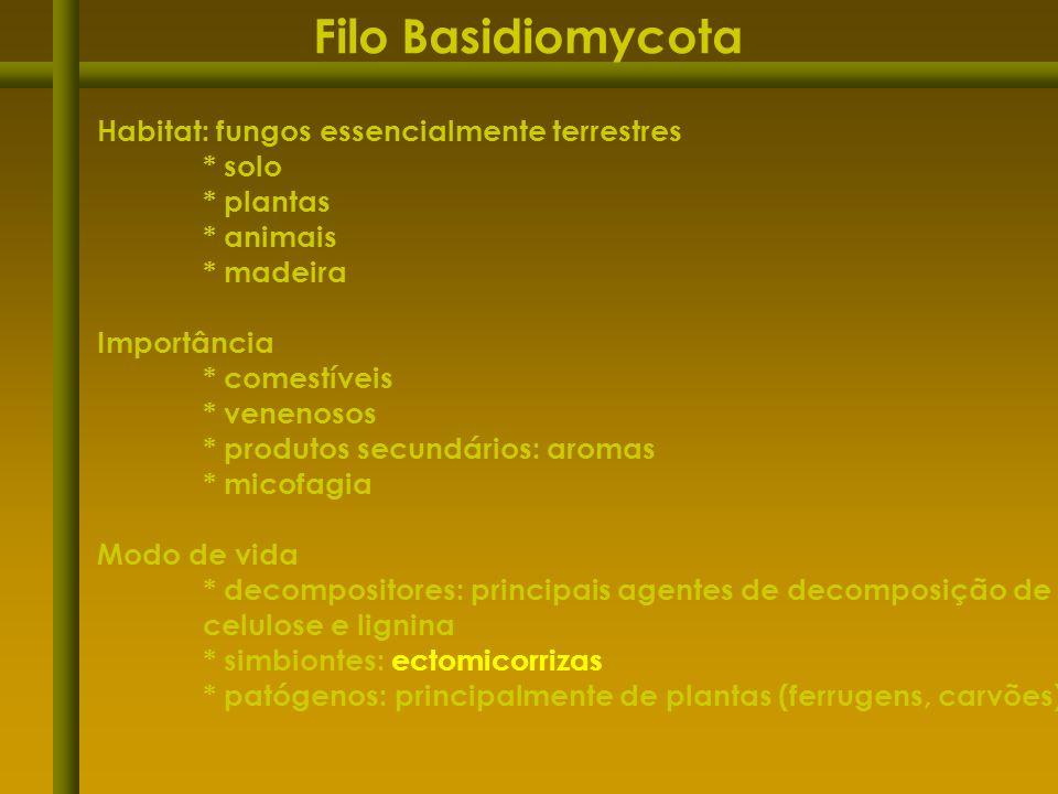 Filo Basidiomycota Habitat: fungos essencialmente terrestres * solo