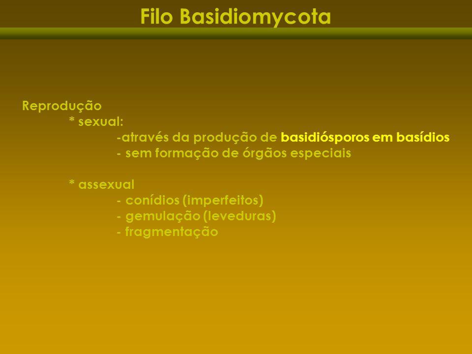 Filo Basidiomycota Reprodução * sexual: