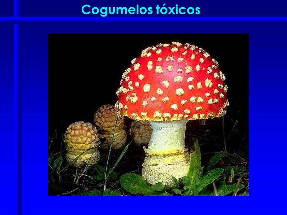 Cogumelos tóxicos