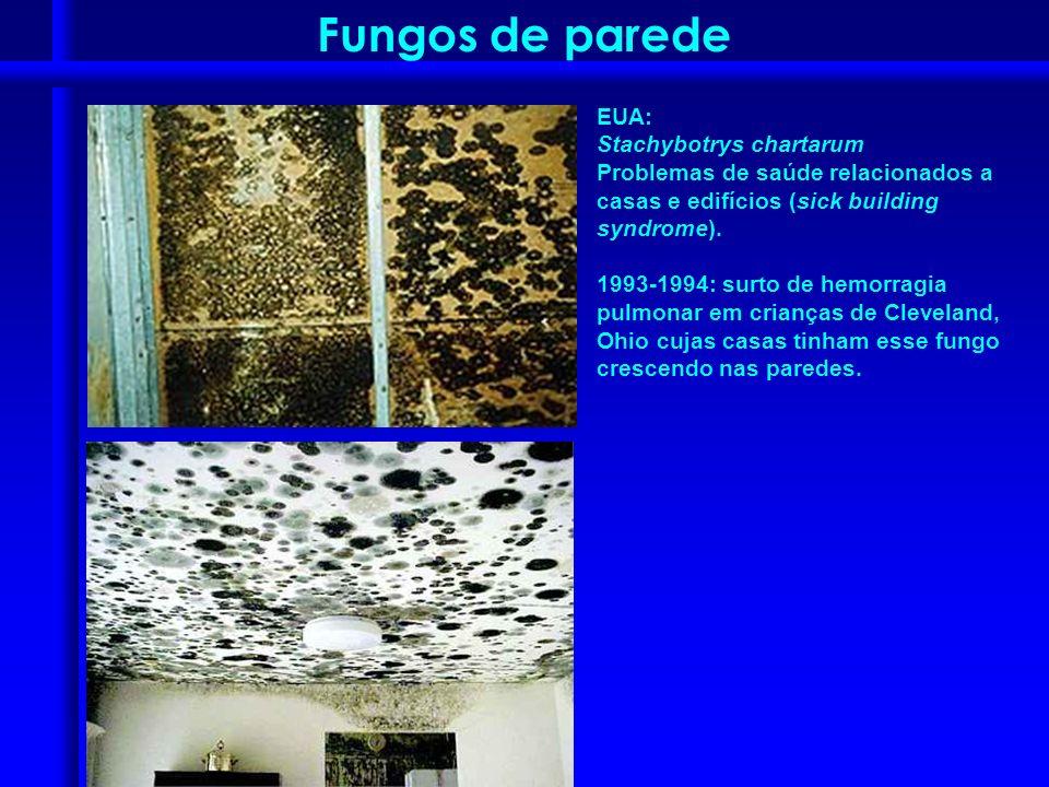 Fungos de parede EUA: Stachybotrys chartarum