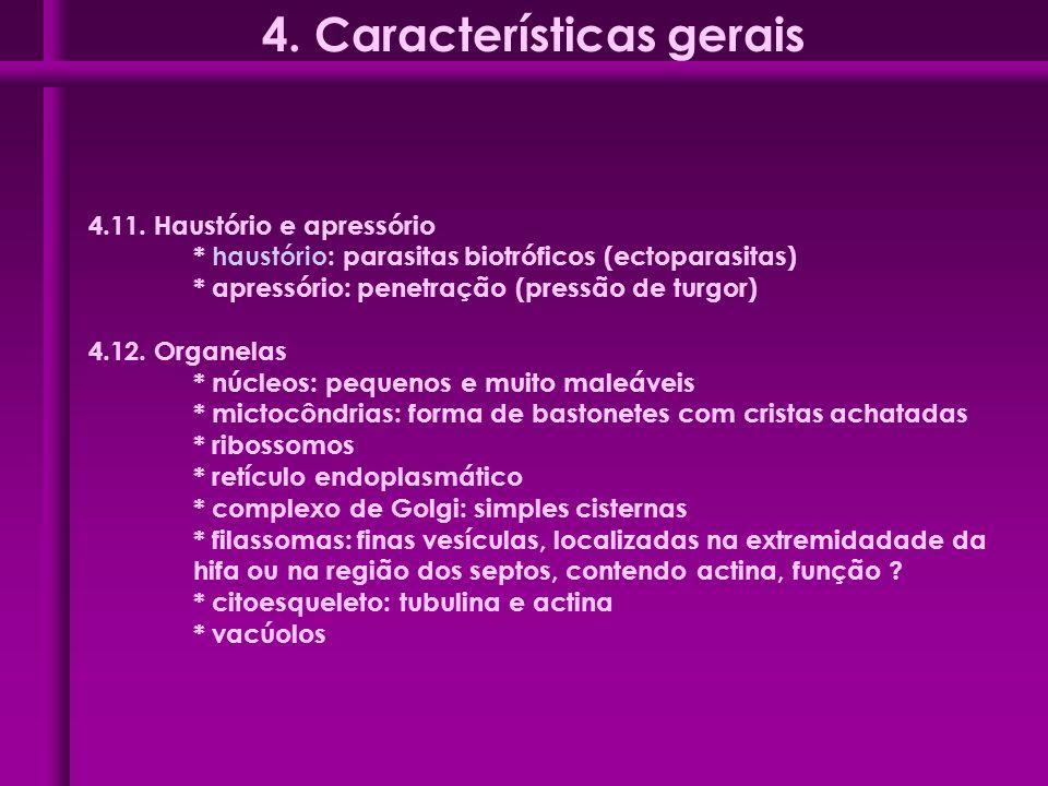 4. Características gerais