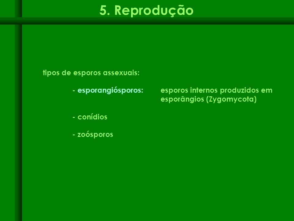 5. Reprodução tipos de esporos assexuais: