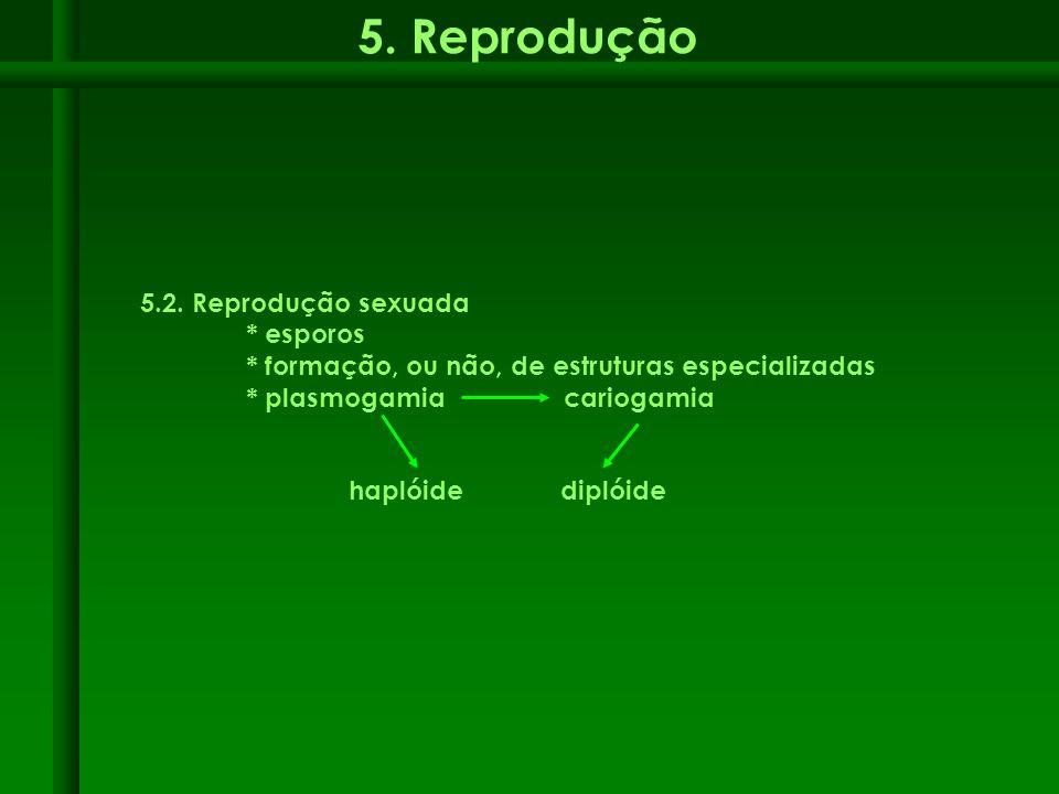 5. Reprodução 5.2. Reprodução sexuada * esporos