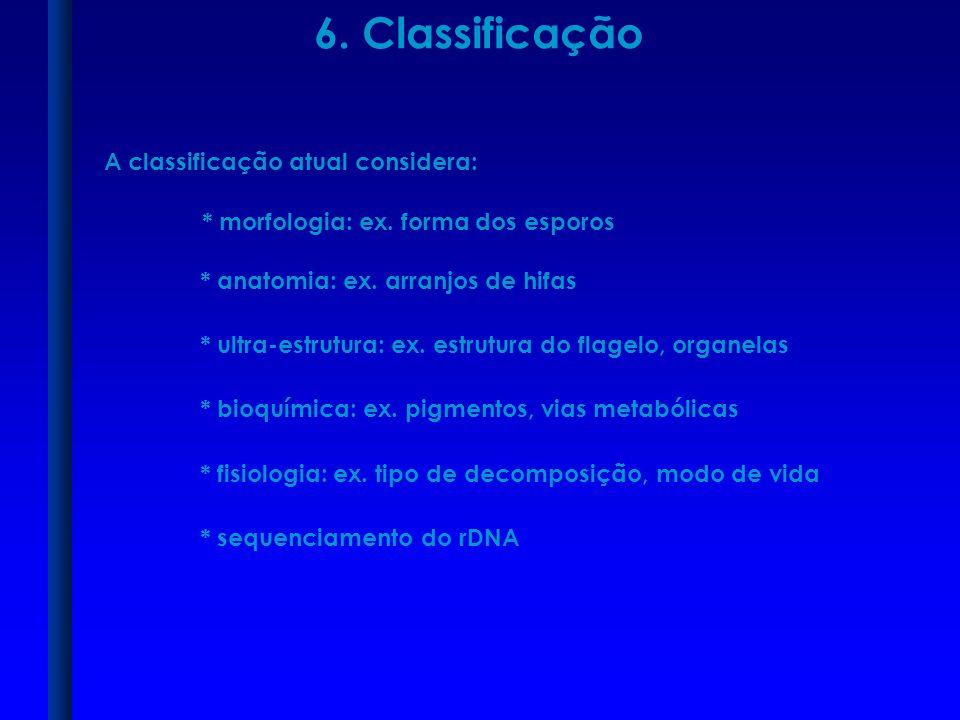 6. Classificação A classificação atual considera: