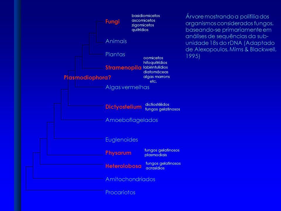 Árvore mostrando a polifilia dos organismos considerados fungos,